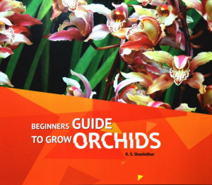 Beginners Guide to Grow Orchids